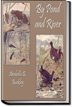 By Pond and River by Arabella B. Buckley