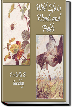 Wild Life in Woods and Fields by Arabella B. Buckley